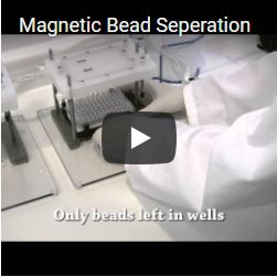 Magnetic Bead Seperation